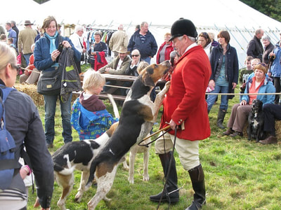 Friendly fox-hounds at Yetholm Show.