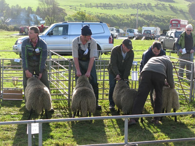 The prize-winners are chosen at Yetholm Show.